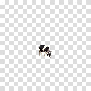 Dairy cattle, Dairy cow PNG