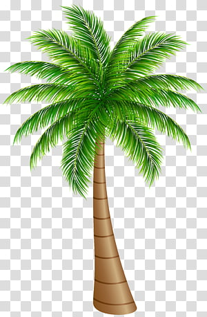 coconut tree illustration, Arecaceae Coconut , Palm Tree Large PNG clipart