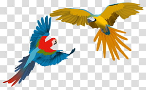 Parrot Scarlet macaw Bird Drawing, macaw PNG clipart