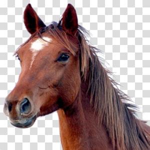Horse head mask , horse PNG