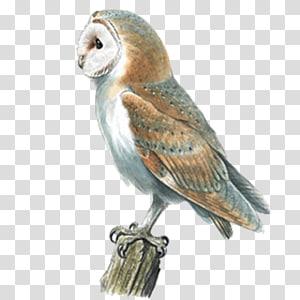 Barn owl Swallow Bird Pellet, owl PNG clipart