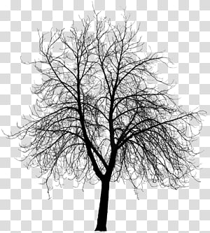dry tree PNG clipart
