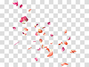 Flower Petal PicsArt Studio editing, flower PNG