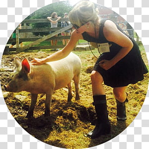 Domestic pig Animal sanctuary The greatness of a nation can be judged by the way its animals are treated., pig PNG clipart