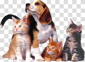 Dog–cat relationship Puppy Dog–cat relationship Kitten, Cat PNG clipart