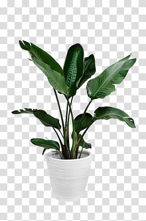 Arecaceae Plant Leaf Palm branch, Potted green plants, green leafed plant and white plant pot PNG clipart