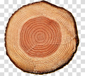 tree ring PNG