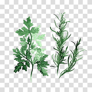 green plant , Herb Watercolor painting Parsley Art, Green leaves PNG clipart
