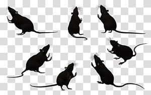 Whiskers Black rat Laboratory rat Mouse Rodent, Black Rat s PNG