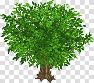 Portable Network Graphics graphics Tree, tree PNG clipart