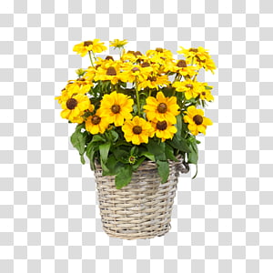 Common sunflower Floral design Transvaal daisy Cut flowers Chrysanthemum, chrysanthemum PNG