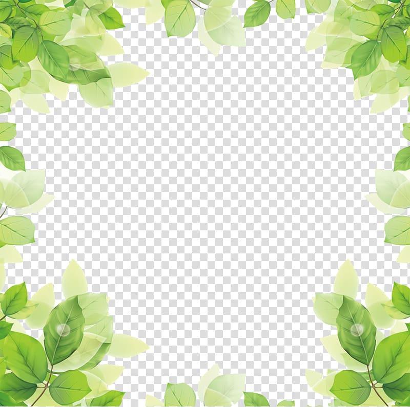 leaf PNG