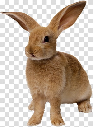 yellow rabbit PNG