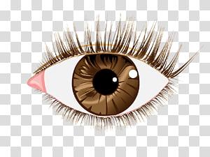 Eyelash extensions , Eye PNG clipart