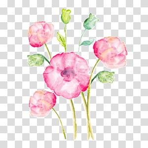pink poppy flowers illustration, Watercolor painting Drawing , acuarela PNG clipart