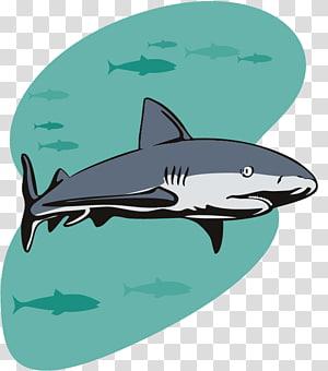Shark Party Birthday Illustration, cartoon shark PNG clipart