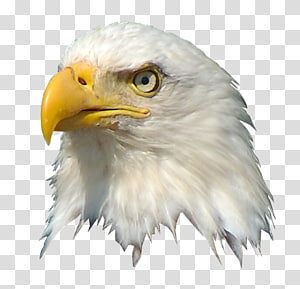 United States American Eagle Outfitters, united states PNG clipart
