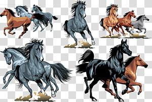 Horse Equestrianism , Horse gallop chart PNG