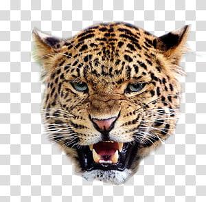 Jaguar Lion Snow leopard Felidae Giraffe, cheetah PNG