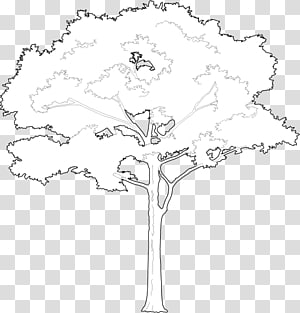 /m/02csf Floral design Line art Drawing, Tree 2D PNG clipart