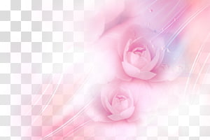 two pink roses illustration, Garden roses Pink Beach rose , Pink roses PNG
