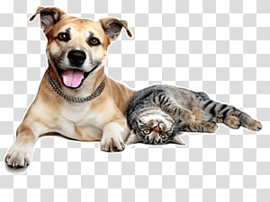 Dog–cat relationship Pet sitting Dog–cat relationship Veterinarian, dogs and cats PNG