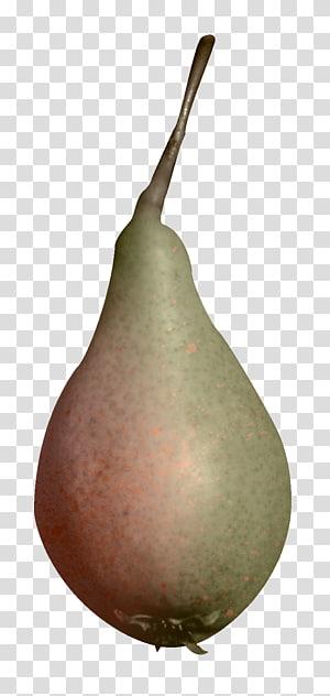 European pear Fruit, pear PNG clipart