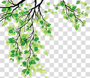 Leaf , Green leaves PNG clipart