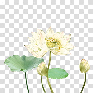 white petaled flower , Common carp Ink wash painting Poster Chinese painting, Lotus lotus leaf decoration PNG clipart