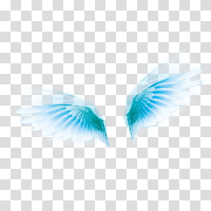 Wing Icon, Pretty Wings PNG clipart