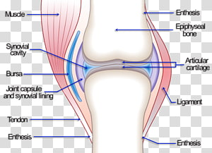 Knee pain Joint Hip Osteoarthritis, joint pain PNG