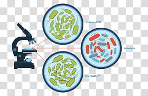 Food poisoning Salmonella E. coli Food safety, Food infographic PNG clipart