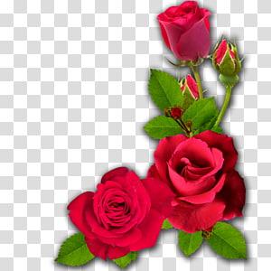 Cut flowers Garden roses, Dussehra PNG