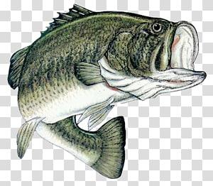 Bass fishing Largemouth bass Fishing tournament, Fishing Tournament PNG clipart