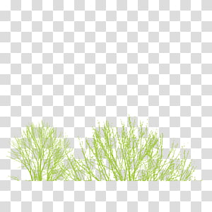 Icon, Grass PNG