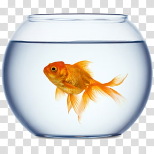 Goldfish Aquarium , fish PNG clipart