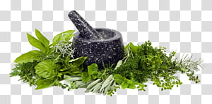 black-and-grey mortar pestle surrounded with green leafey veggies, Mortar and pestle Herb Spice Food, oregano PNG