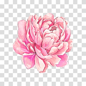 hand-painted watercolor flowers PNG