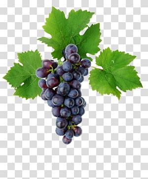 Kyoho Grape leaves Vine Must, grape PNG clipart