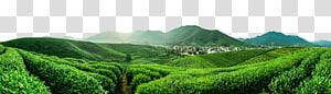 green hill landscape, Jiangsu Furong Tea Plantation Yum cha Da Hong Pao Tieguanyin, Forest Forest PNG clipart