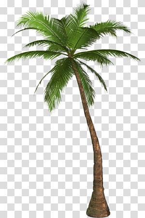 Arecaceae Desktop Tree , large coconut tree PNG clipart