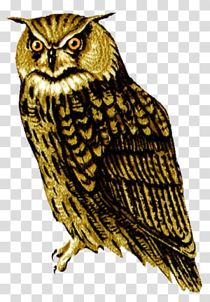 Barred Owl , sowlshd PNG clipart
