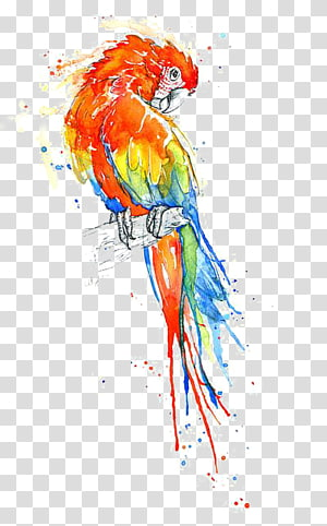 scarlet macaw , Bird True parrot Watercolor painting Macaw, Water Parrot PNG