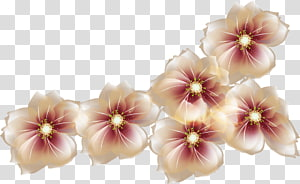 Flower , flower PNG