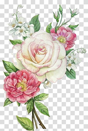 white and pink roses , Pink flowers PNG