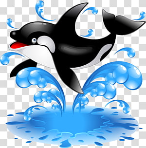 Baby Orca Killer whale Dolphin , dolphin PNG clipart
