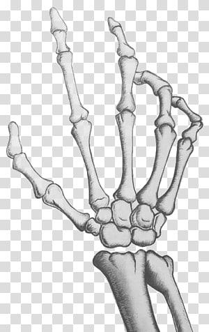 gray hand bone illustration, Human skeleton Hand Drawing Bone, Palm skeleton PNG