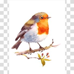 Bird Watercolor painting Drawing American robin, aquarell PNG
