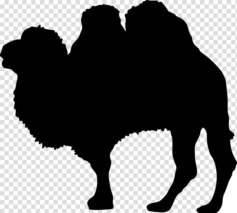 Camel Silhouette Wildlife Tw Png Clipart Clipartsky