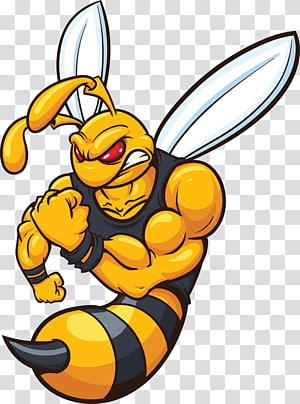 honeybee , Hornet Bee Yellowjacket Cartoon, Muscle Hornets PNG clipart